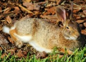 Year of the Rabbit: A positive and inspiring outlook for 2011?